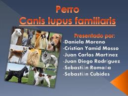 Perro Canis lupus familiaris
