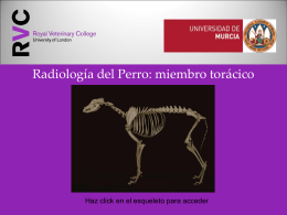 Dog - Universidad de Murcia