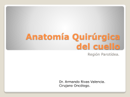 Anatomía Quirúrgica del cuello -