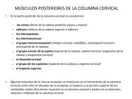 MÚSCULOS POSTERIORES DE LA COLUMNA CERVICAL