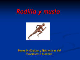 1. Descripción anatómica.