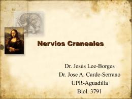 Nervios Craneales - EPIDEMIOLOGIA Y ANATOMÍA 2 |