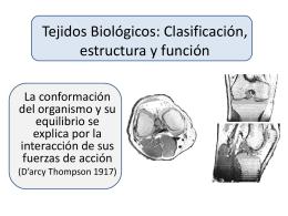 Tejidos Biológicos: Clasificación, estructura y
