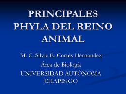 PRINCIPALES FILA DEL REINO ANIMAL