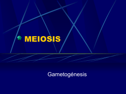 MEIOSIS - BIOLOGIA | Just another WordPress.com