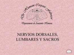 NERVIOS DORSALES, LUMBARES, SACROS Y COCCÍGEOS