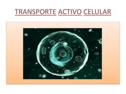 TRANSPORTE ACTIVO CELULAR - Biología 100 -
