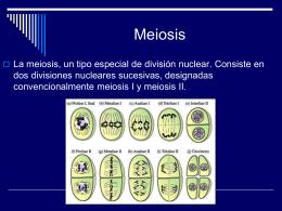 Ciclo Celular: Mitosis y Meiosis