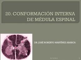 CONFORMACION INTERNA DE MEDULA ESPINAL