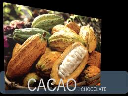 CACAO - Investigacion-2257-2012-2