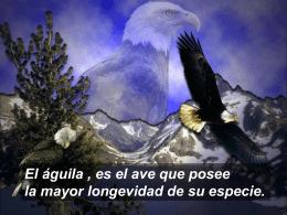 El Aguila - C