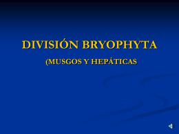 DIVISIÓN BRYOPHYTA (MUSGOS Y HEPÁTICAS