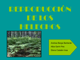 REPRODUCCIÓN DE LOS HELECHOS