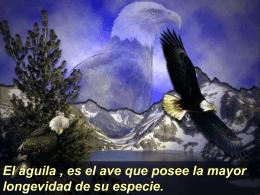 El Aguila - Máster Sergio J. Navarro Hudiel