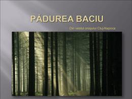 Pădurea Baciu