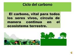 Ciclo del carbono - Cienciasmariolv`s Weblog