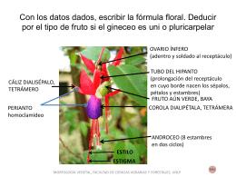 Diapositiva 1 - Morfología Vegetal