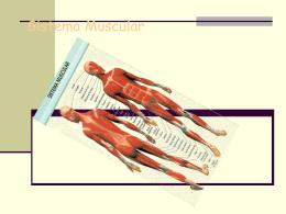 Sistema Muscular - Jonatanedu`s Weblog | Just