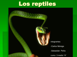 Los reptiles - BIOLOGIA | Just another