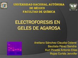 ELECTROFORESIS EN GELES DE AGAROSA
