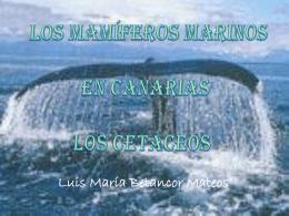 Los Mamíferos Marinos