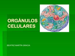 ORGÁNULOS CELULARES - Trabajosciencias`s Weblog