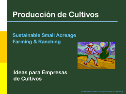 Crop Production Ideas