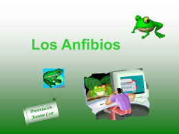 Los Anfibios - Pingry School