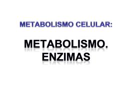 METABOLISMO CELULAR. ENZIMAS