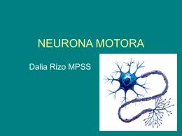NEURONA MOTORA