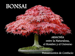 Bonsai - C-educa.com