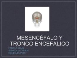Mesencéfalo y tronco encefálico