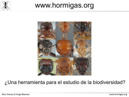 www.hormigas.org