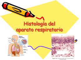 Histología del aparato respiratorio