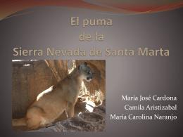 El puma de la Sierra Nevada de Santa Marta