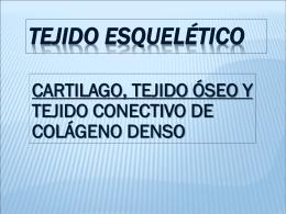 TEJIDOS DE SOSTEN - Histología y Embriología «