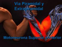 Via Piramidal y Extrapiramidal