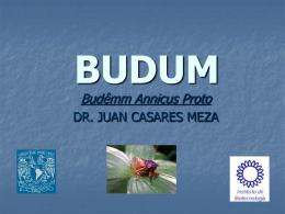 BUDUM - El Tamiz