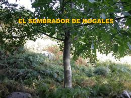 el sembrador de nogales - El Evangelista Mexicano