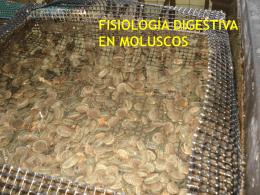 Fisiología Digestiva en Moluscos -