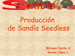 Producción de semillas de