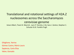Translational and rotational settings of H2A.Z