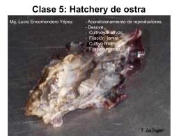 Clase 5: Hatchery de ostra