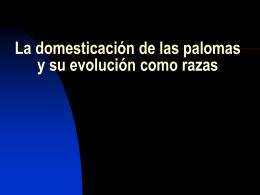 La domesticación de las palomas y su evolución