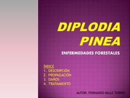 DIPLODIA PINEA