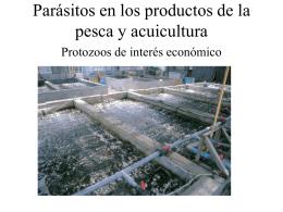Parásitos en los productos de la pesca. Protozoos