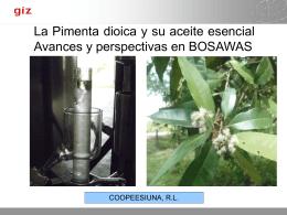 La Pimenta dioica y su aceite esencial Avances y