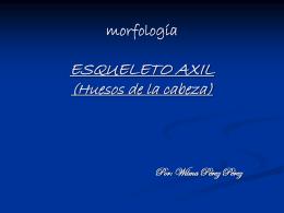 ESQUELETO AXIL - :: Universidad Autónoma de