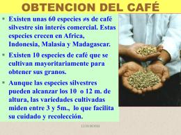 CAFÉ VARIEDADES MAS COMUNES - UPCH