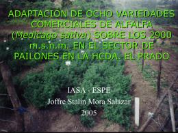 ADAPTACIÓN DE OCHO VARIEDADES COMERCIALES DE